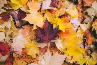 Mixed Assortment of Leaves