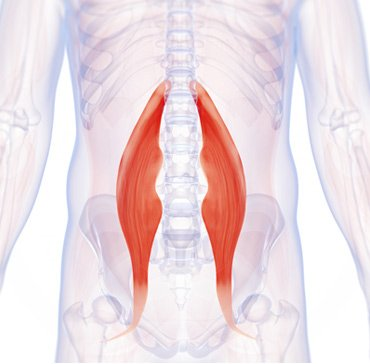 hip-flexor-muscle